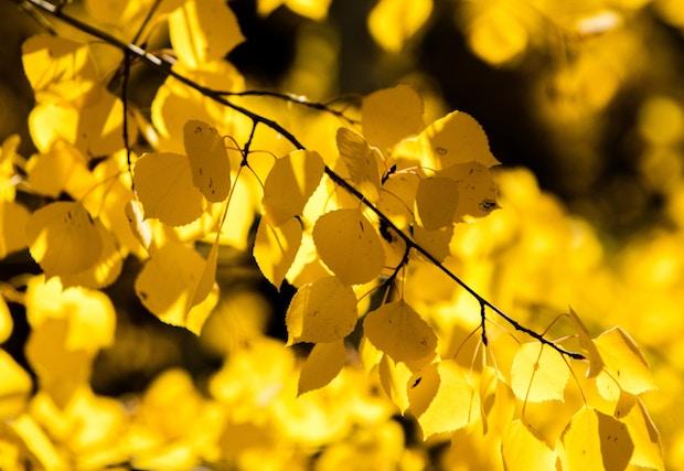 colorado fall foliage report for 2018 alpine property